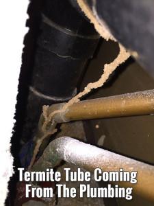 termites_from_plumbing