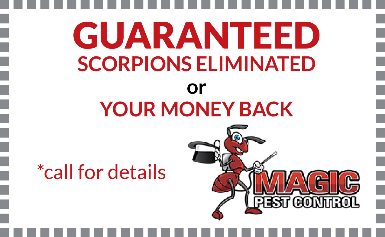 Guaranteed Scorpions Elimination - Coupon