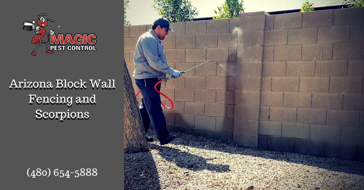 Arizona Block Wall Fencing and Scorpions