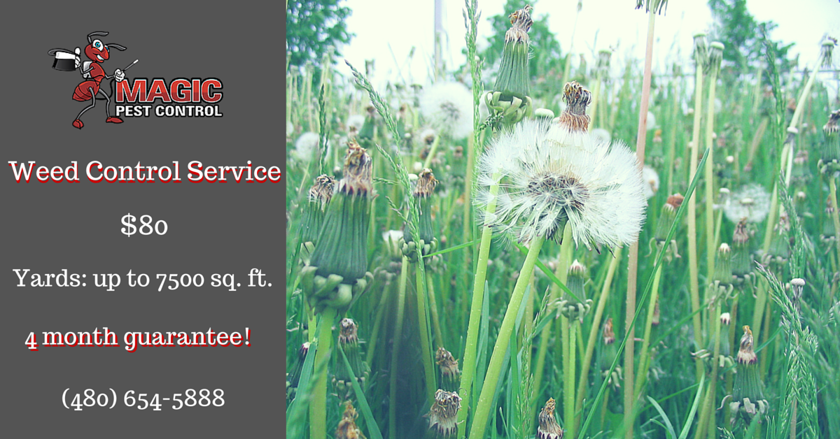 Weed Control Service $80 Yards up to 7500 sq.ft. With a 4 month guarantee