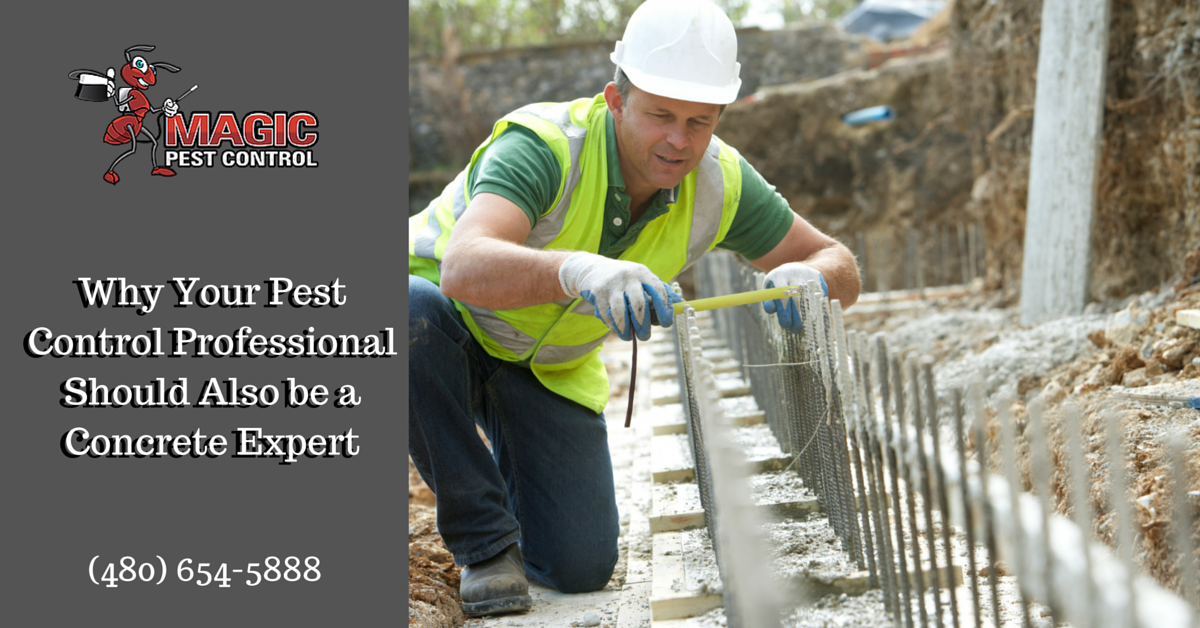 Why Your Pest Control Professional Should Also be a Concrete Expert