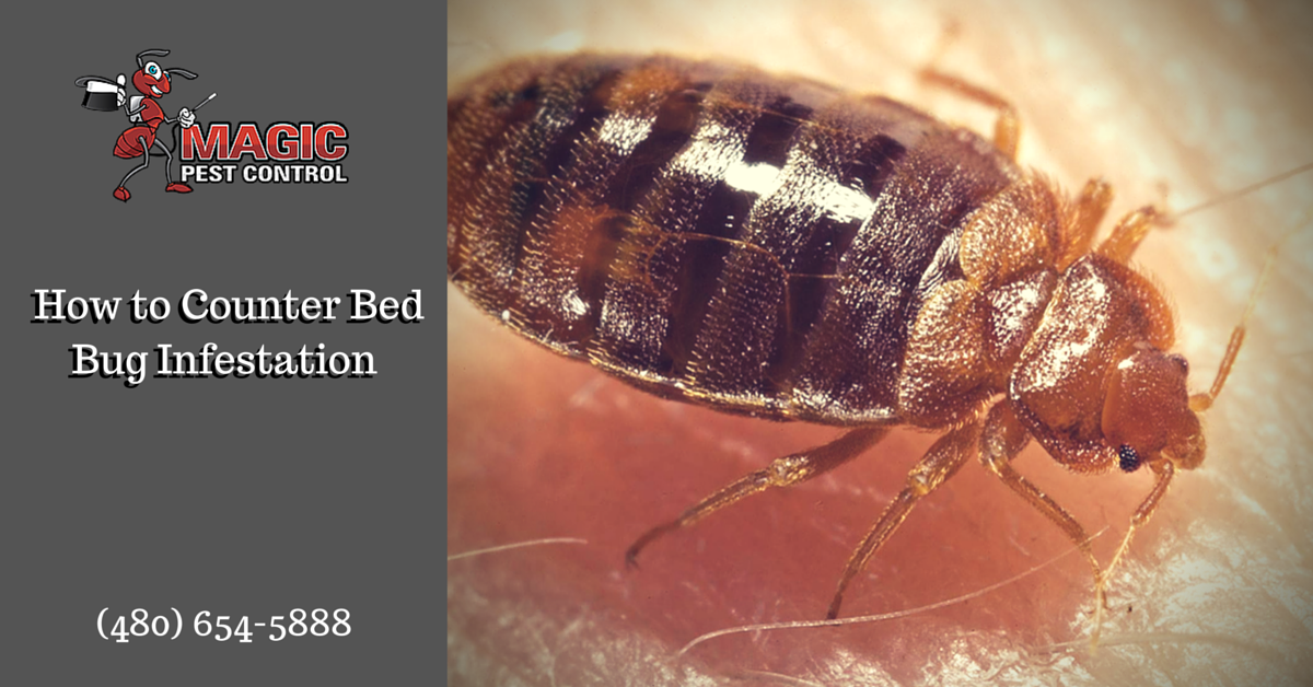 How to Counter Bed Bug Infestation