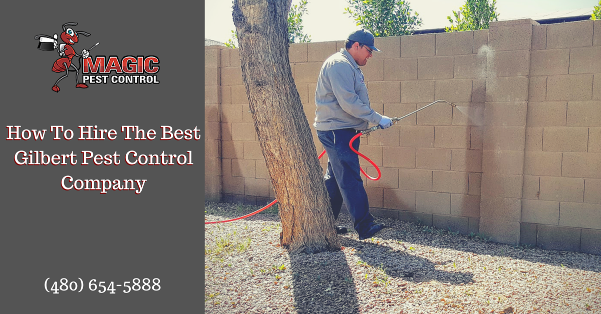 How To Hire The Best Gilbert Pest Control Company