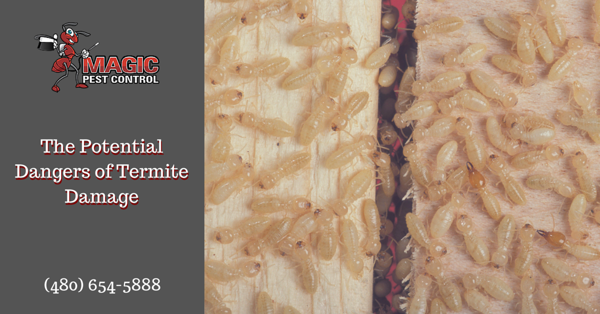 The Potential Dangers of Termite Damage