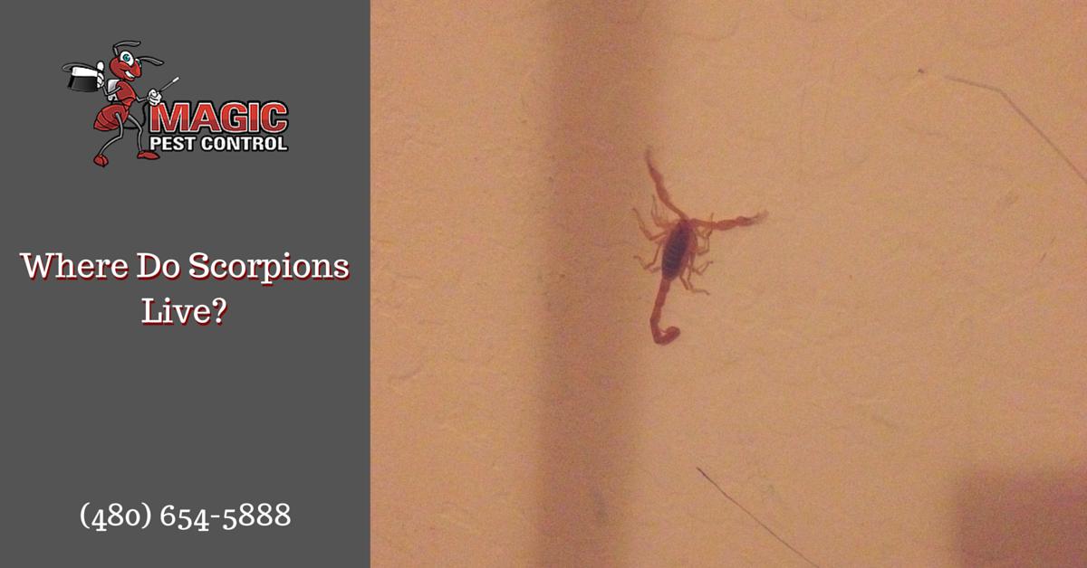 Where Do Scorpions Live?
