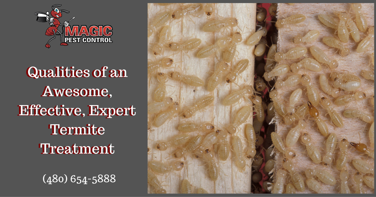 Qualities of an Awesome, Effective, Expert Termite Treatment