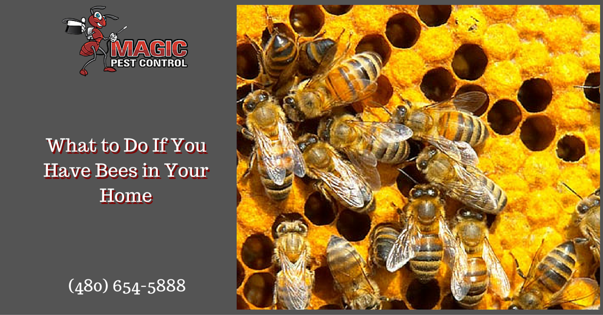 What to Do If You Have Bees in Your Home