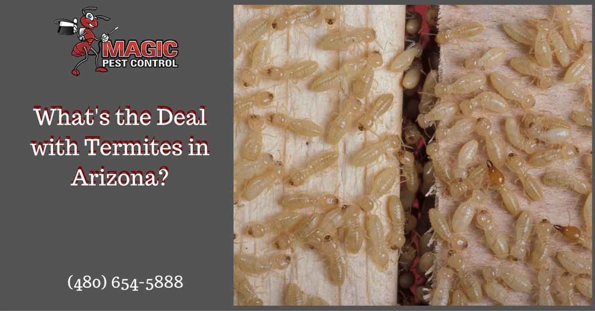 What's the Deal with Termites in Arizona?