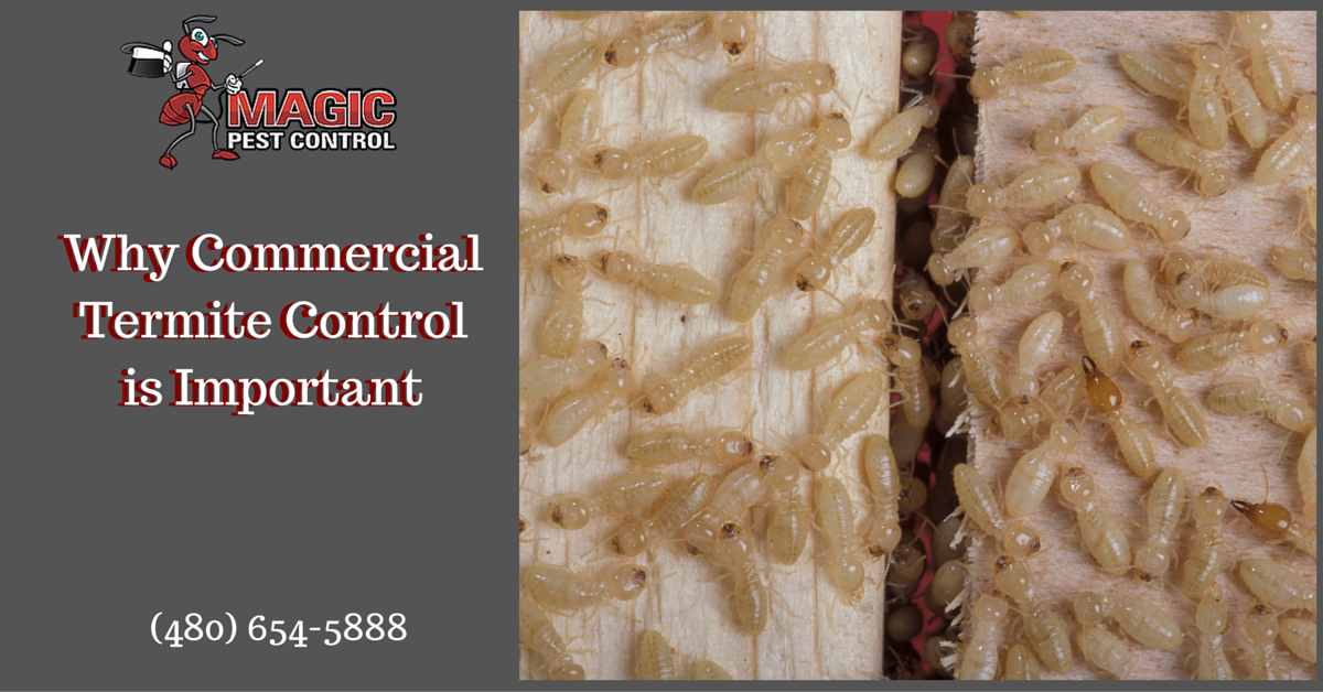 Why Commercial Termite Control is Important