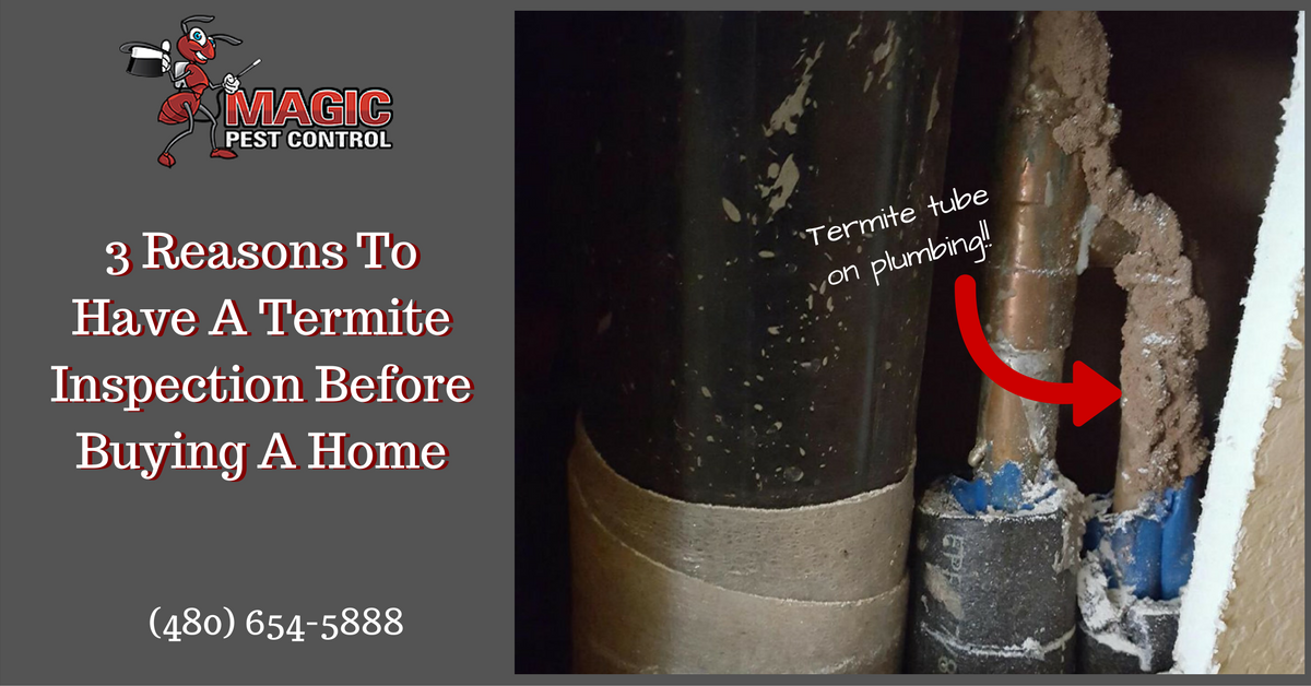 3 Reasons To Have A Termite Inspection Before Buying A Home