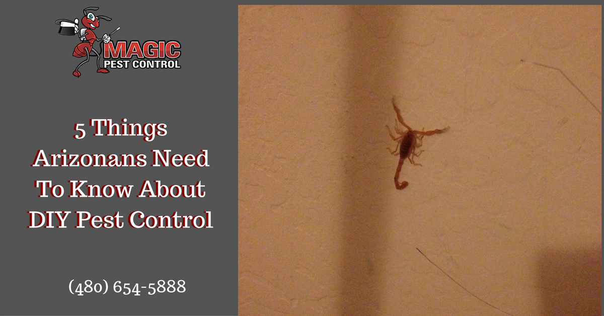 5-things-arizonans-need-to-know-about-diy-pest-control