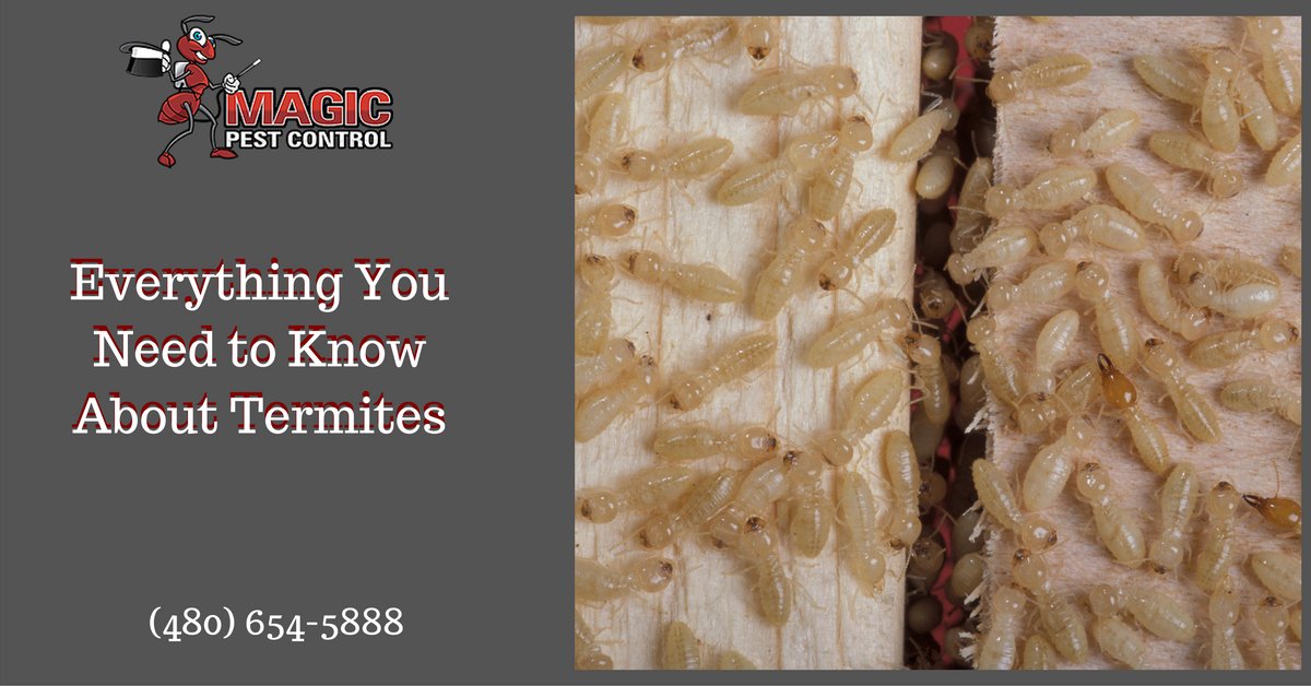 everything-you-need-to-know-about-termites