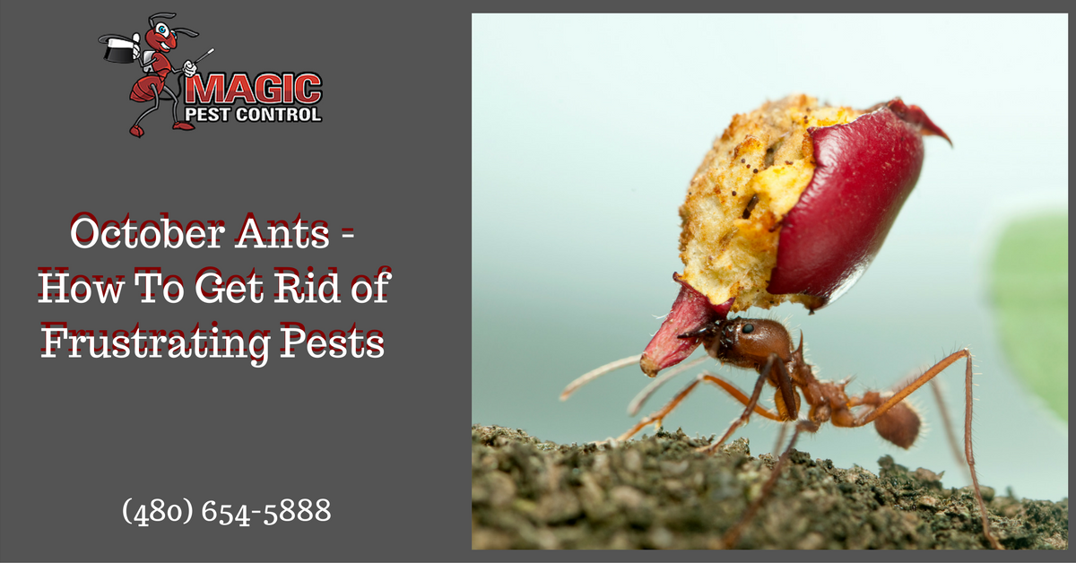october-ants-how-to-get-rid-of-frustrating-pests