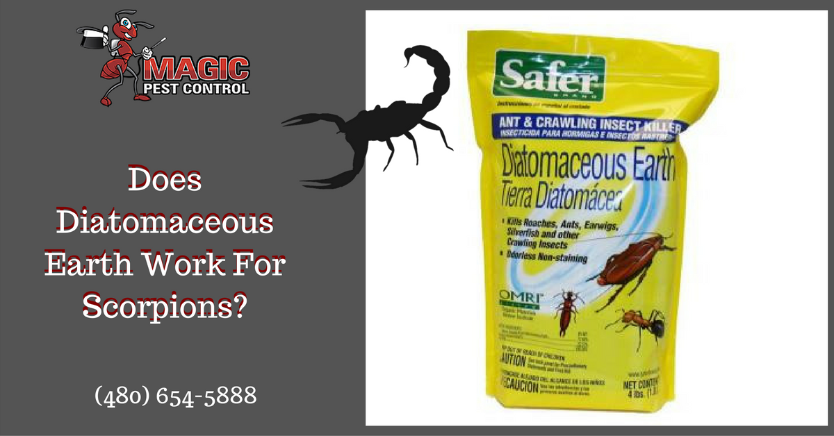 diatomaceous-earth-scorpions