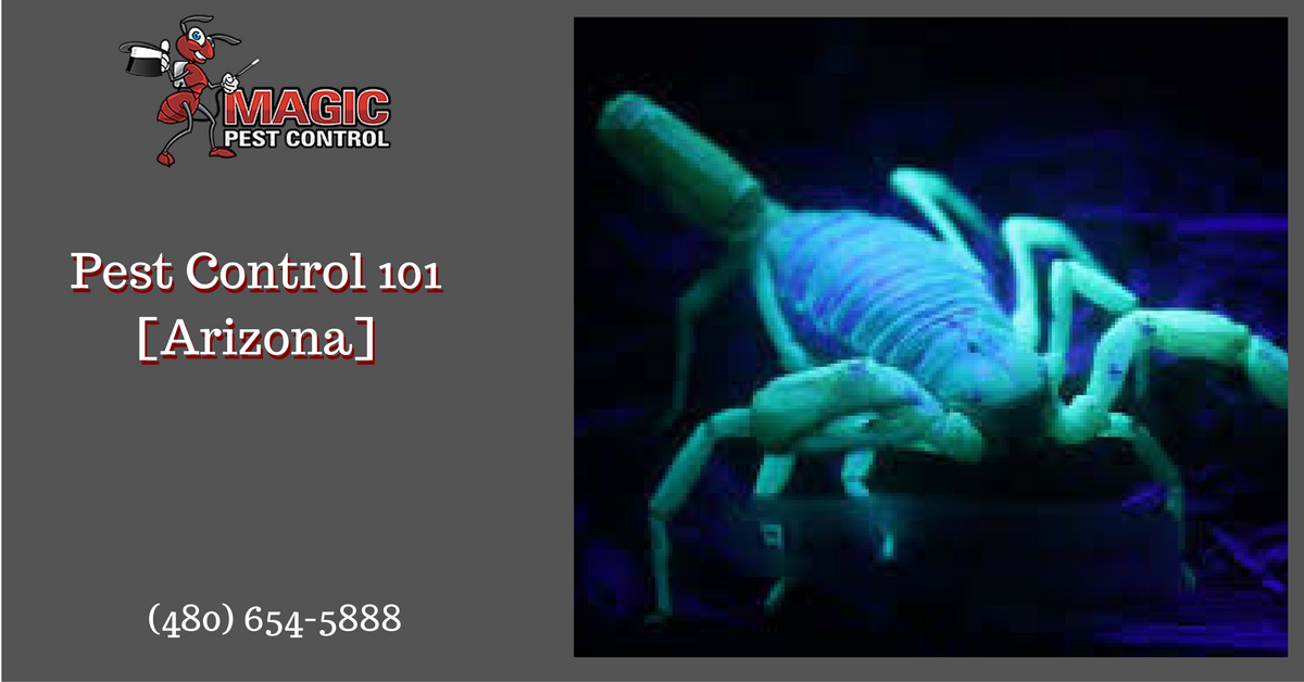 pest-control-101-arizona