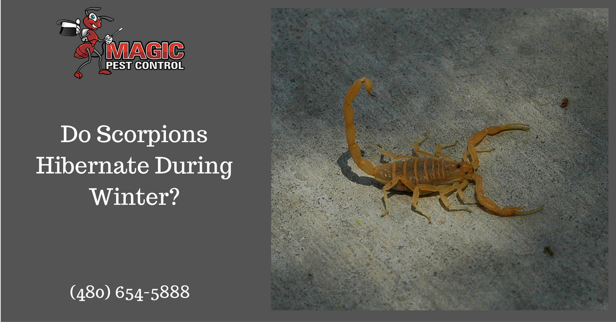 do-scorpions-hibernate-during-winter