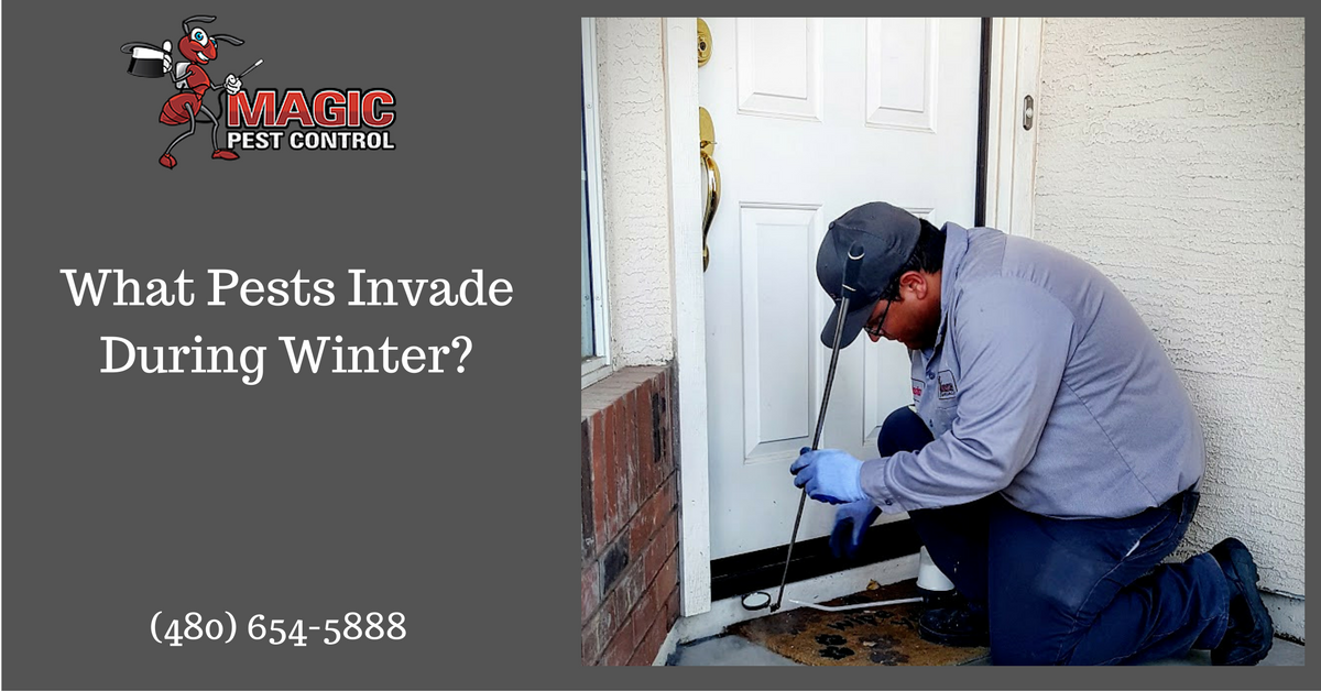 what-pests-invade-during-winter