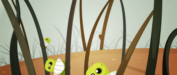 Lice Invasion Inside Hairy Landscape