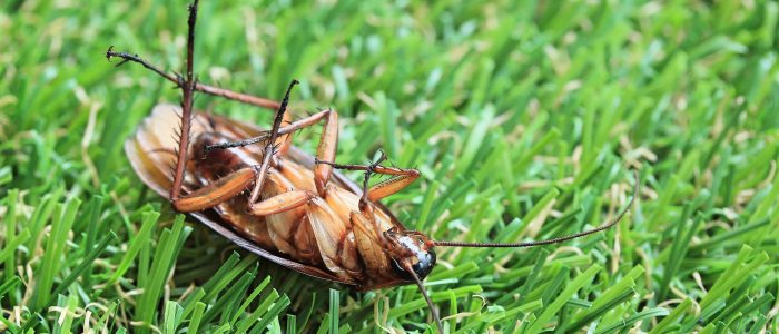 75498366 - cockroaches