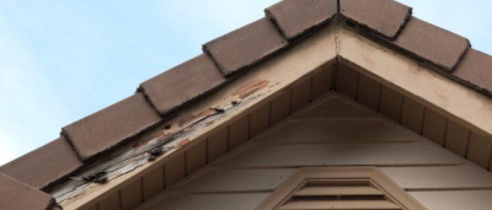 arizona termites 5