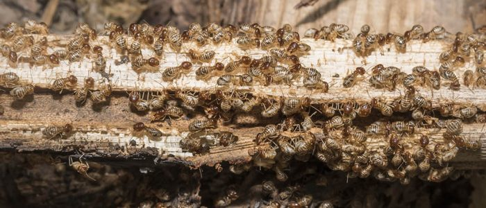 Radial blur, Group of termite are eating wood