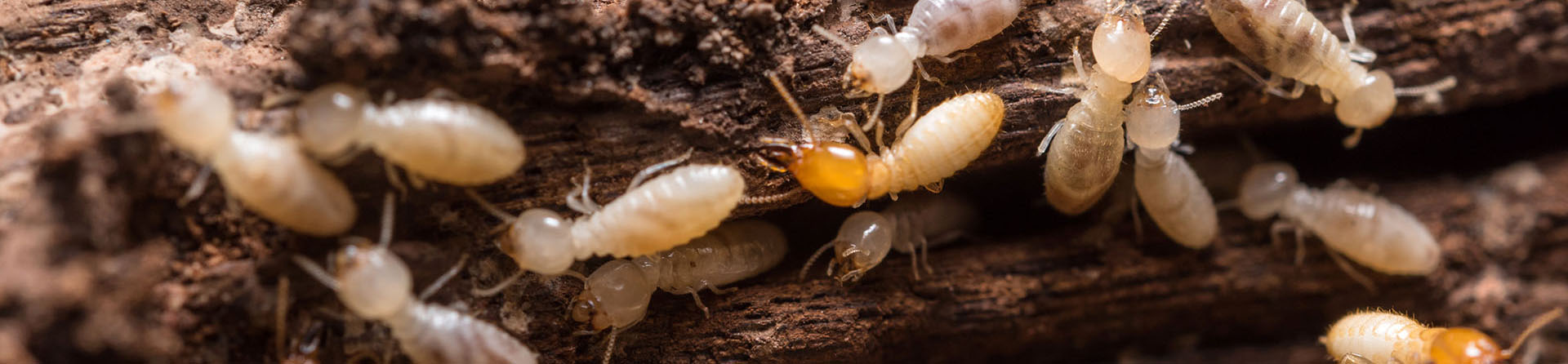 It's Always Termite Season